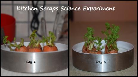 Kitchen Scraps Science